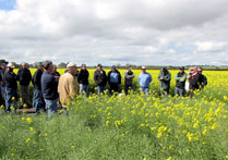 Improving land protection outcomes for erosion prone soils on Eyre Peninsula