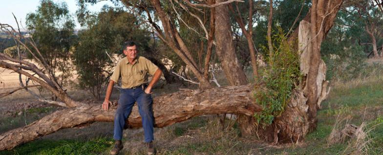 Clyde Hazel, farmer involved with Environmental Stewardship program to protect peppermint box woodland. On his property near Kapunda in the peppermint box area.